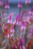 Flores macras Foto de archivo