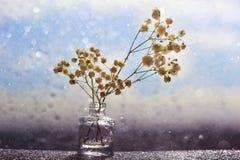 Flores macras blancas con la falta de definición del bokeh fotografía de archivo libre de regalías