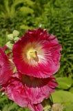 Flores macras con el insekt Fotografía de archivo
