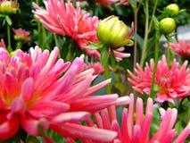 Flores macro Foto de Stock Royalty Free