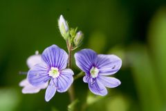 Flores macro Fotos de Stock