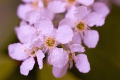 Flores macro Foto de Stock