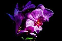 Flores macro Imagem de Stock Royalty Free