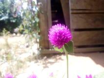 Flores macro Fotografia de Stock