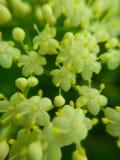 Flores macro brancas imagens de stock
