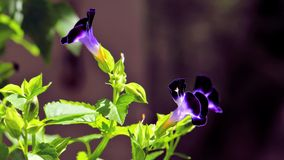 Flores macro, Florida Imagem de Stock Royalty Free