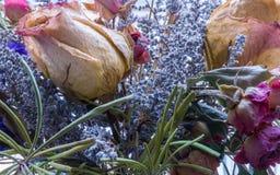 Flores, macrophotography Fotos de archivo