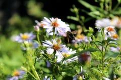 Flores magníficas e bonitas no jardim fotos de stock royalty free