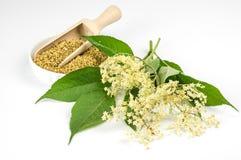 Flores mais velhas secadas wirÂ'th da bacia Imagem de Stock Royalty Free