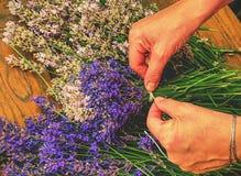 Flores, manos y preparación de la lavanda de los ramos agradables de los olores Fotografía de archivo