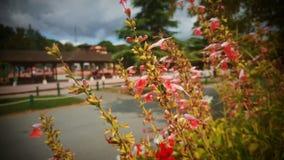 Flores maravilhosas fotos de stock royalty free