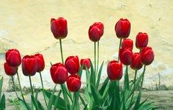 Flores maravilhosas Imagem de Stock Royalty Free