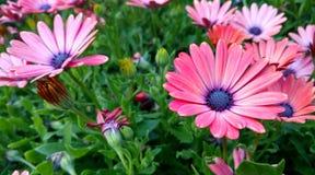 Flores maravilhosas Imagens de Stock Royalty Free
