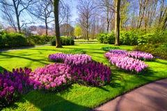 Flores maravilhosas do jacinto nos jardins de Keukenhof Bonito Fotos de Stock Royalty Free