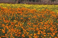 Flores maravillosas Imagen de archivo libre de regalías