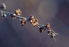Flores marchitadas Fotografía de archivo libre de regalías