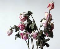 Flores marchitadas Foto de archivo libre de regalías