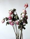 Flores marchitadas Imágenes de archivo libres de regalías