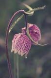 Flores marrones únicas, alarmas Fotografía de archivo