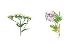 Flores medicinais Foto de Stock Royalty Free