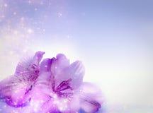 Flores mágicas Imagem de Stock Royalty Free
