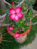 Flores mim Fotos de Stock Royalty Free