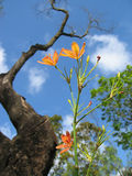 Flores minúsculas anaranjadas fotos de archivo