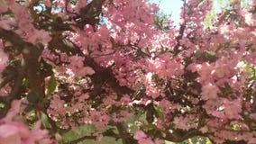Flores minúsculas bastante rosadas en Japón Fotos de archivo libres de regalías