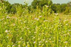 Flores minúsculas de la primavera Imagen de archivo