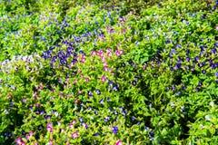 Flores minúsculas en la casa de cristal Fotografía de archivo