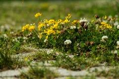 Flores minúsculas en la tierra Fotografía de archivo