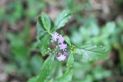 Flores minúsculas salvajes fotos de archivo