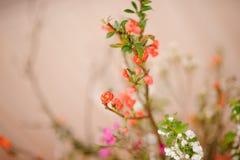 Flores minúsculas y hermosas en el fondo borroso Foto de archivo