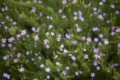 Flores min?sculas fotografía de archivo