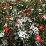 Flores misturadas Andover Hampshire Inglaterra do sul Imagem de Stock