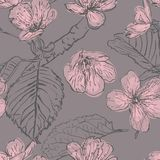 Flores modelo inconsútil, flor de la cereza de la primavera Fondo retro del vector stock de ilustración