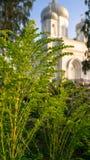 Flores modestas lindas delante de la catedral de piedra blanca de la ascensión bajo luz del sol de oro por una tarde clara del ve Imágenes de archivo libres de regalías