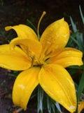 Flores mojadas fotos de archivo