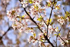 Flores, mola, Europa imagem de stock
