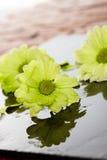 Flores molhadas em uma telha de pedra Imagens de Stock Royalty Free