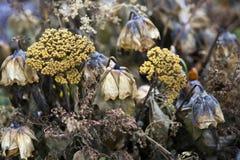 Flores molhadas inoperantes fotografia de stock