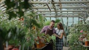 Flores molhando alegres do marido do abraço e do beijo da mulher com potenciômetro do jardim Pares novos felizes do florista no a video estoque