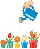 Flores molhando da mão Imagens de Stock Royalty Free