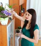 Flores molhando da mulher na casa Foto de Stock
