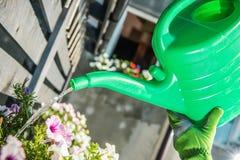 Flores molhando pela lata da água Fotografia de Stock Royalty Free