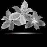 Flores monocromáticas de los lirios Fotos de archivo libres de regalías