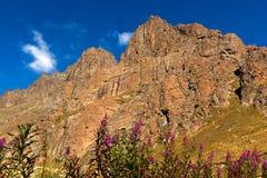 Flores, montañas y cielo azul Imagenes de archivo