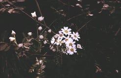 Flores mortais Fotos de Stock Royalty Free
