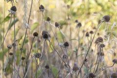 Flores muertas Imagenes de archivo