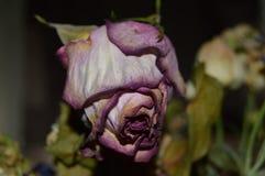 Flores muertas foto de archivo